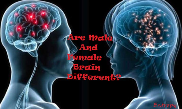 IndiaTv8bfcf7_male-female-brain.jpg